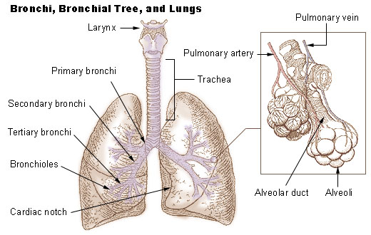 Lung Cancer | CancerQuest