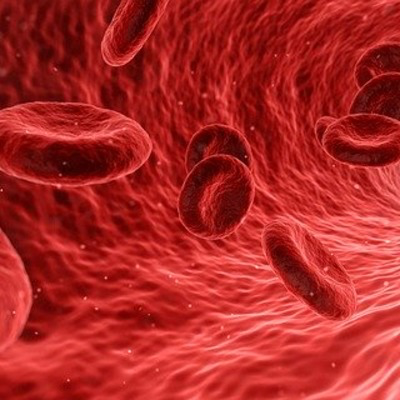 graphic of red blood cells in a vessel
