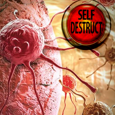 Cancer cells with self destruct button