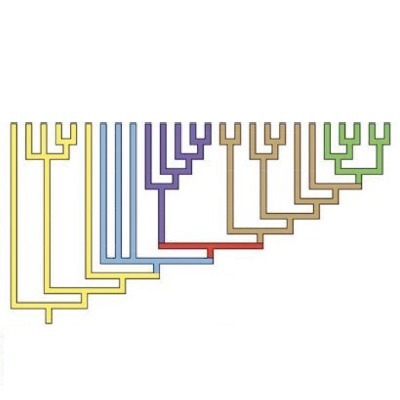 Cladogram - genetic tree - with different colored branches