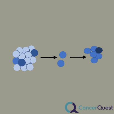 cancer drug resistance. a diagram for selection of drug resistant cells and outgrowth