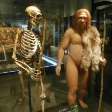 Neanderthal and man