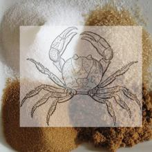 cancer symbol (crab) on top of piles of different kinds of sugar